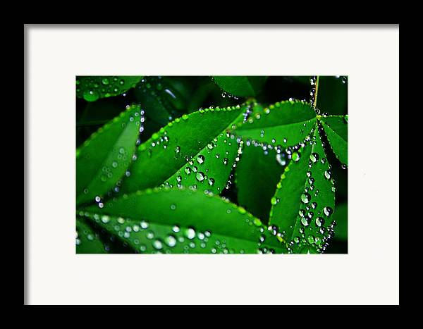 Nature Framed Print featuring the photograph Rain Patterns by Toni Hopper