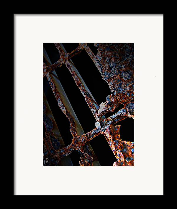 Elm Framed Print featuring the photograph Rat In The Cage by Empty Wall