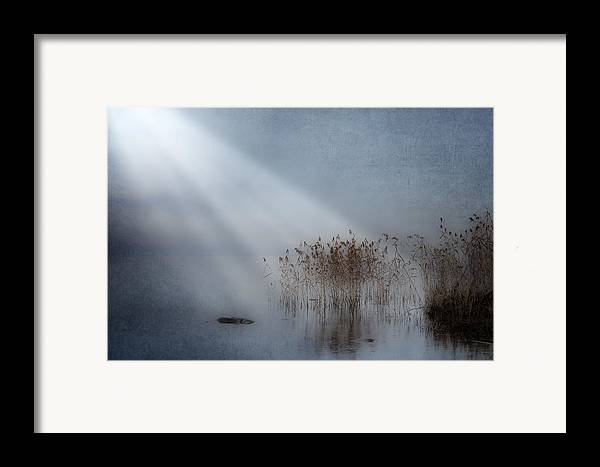 Reeds Framed Print featuring the photograph Rays Of Light by Joana Kruse