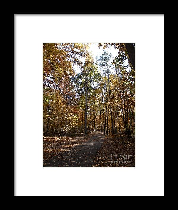 Woods Framed Print featuring the photograph Reach For The Sky by Tom Branson
