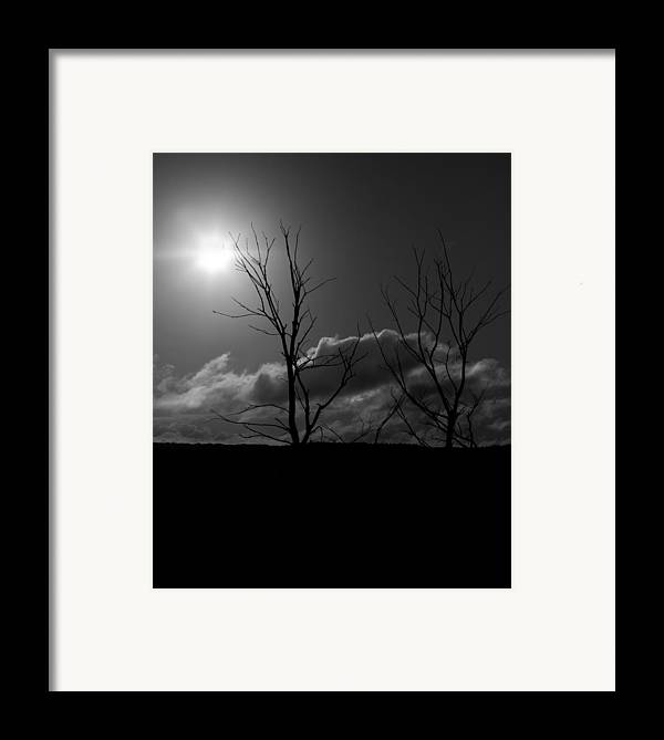 Tree Framed Print featuring the photograph Reach For The Sun by Nigel Jones