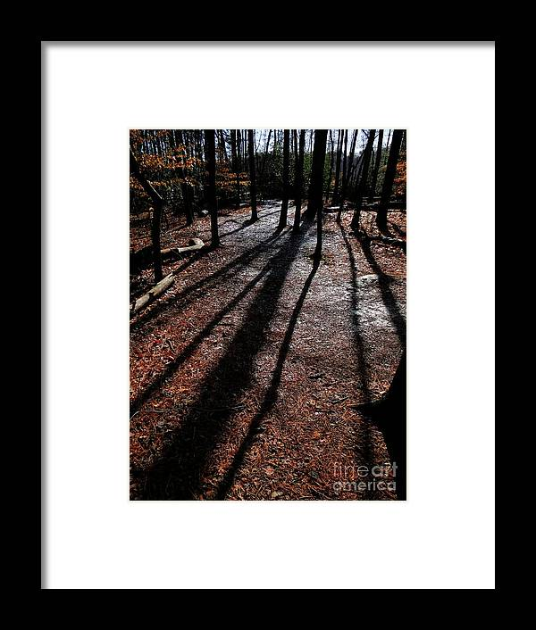 Trees Framed Print featuring the photograph Reaching towards me by Rrrose Pix