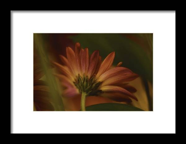 Red Framed Print featuring the photograph Red And Yellow Flower by Charles Garrett