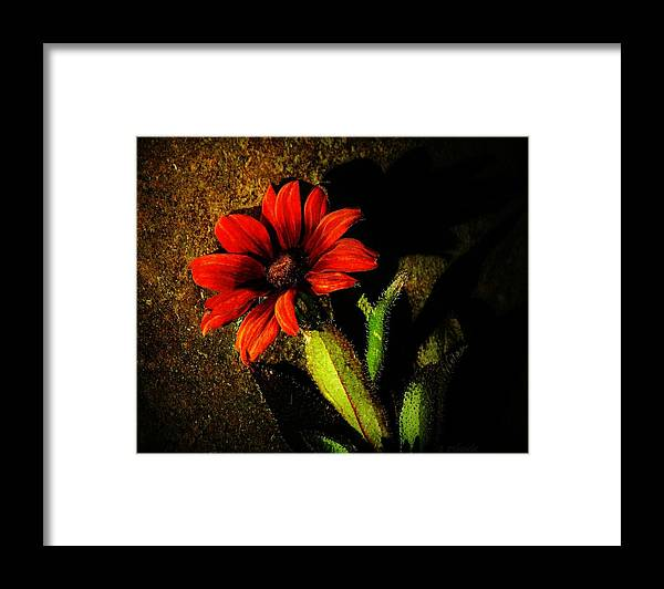 Coneflower Framed Print featuring the photograph Red Coneflower by Chris Berry