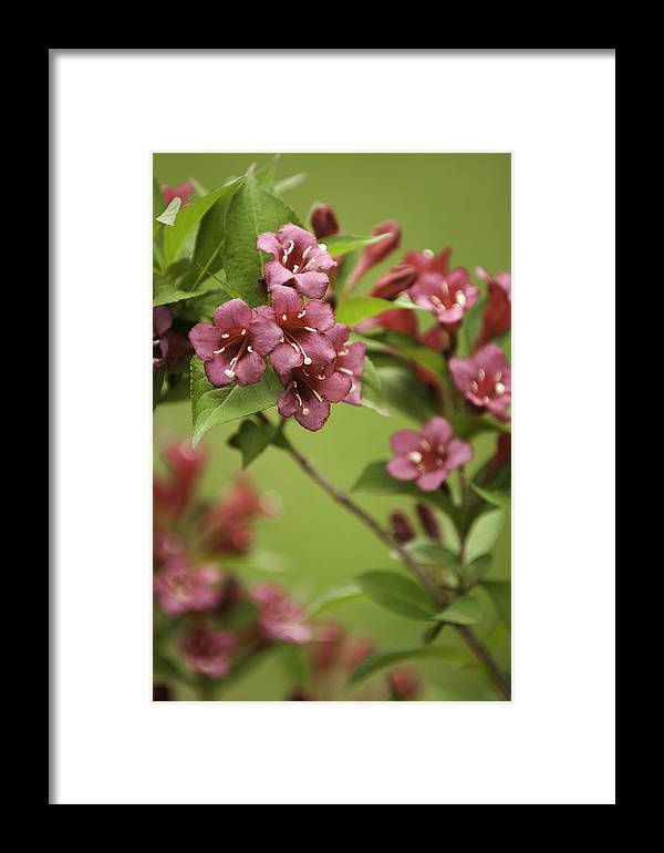 Flowers Framed Print featuring the photograph Red Flowers by Chad Davis