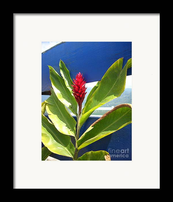 Flower Framed Print featuring the photograph Red Ginger by Randi Shenkman