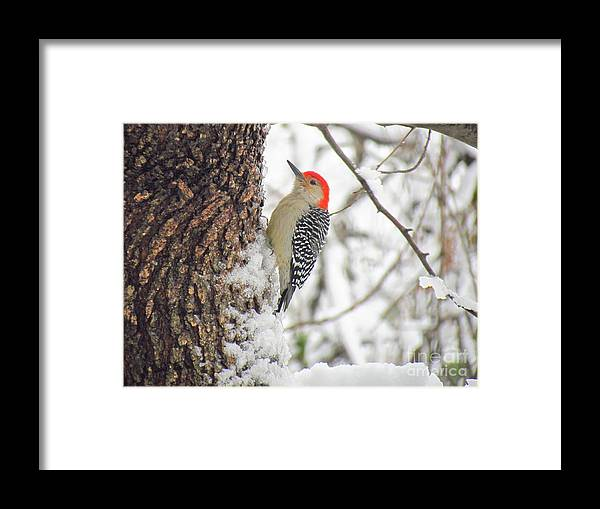 Red-headed Framed Print featuring the photograph Red-Head by Rrrose Pix