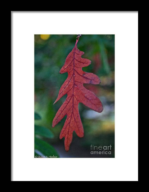 Outdoors Framed Print featuring the photograph Red Leaf Hanging by Susan Herber