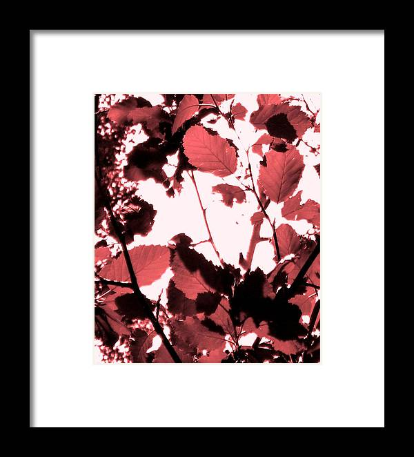 Forest Framed Print featuring the photograph Red Leaves by Amara Roberts