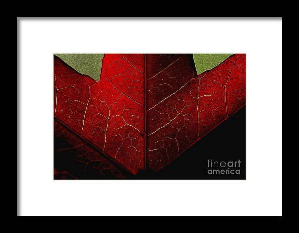 Nature Framed Print featuring the photograph Red Maple Leaf by Penny Haviland