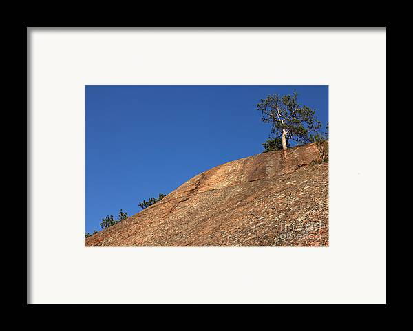 Granite Bedrock Framed Print featuring the photograph Red Pine Tree by Ted Kinsman