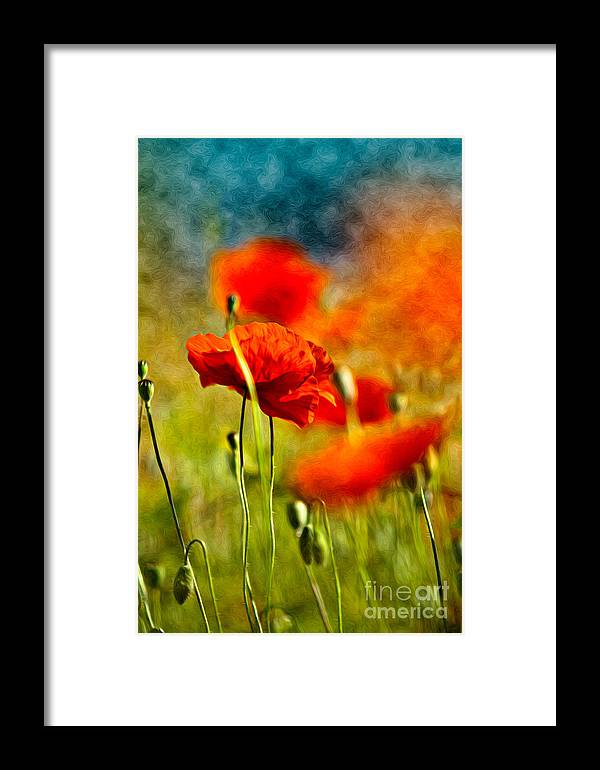 Poppy Framed Print featuring the painting Red Poppy Flowers 01 by Nailia Schwarz