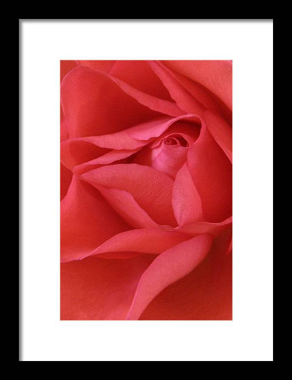 Flower Framed Print featuring the photograph Red Rose by Kathryn Mayhue