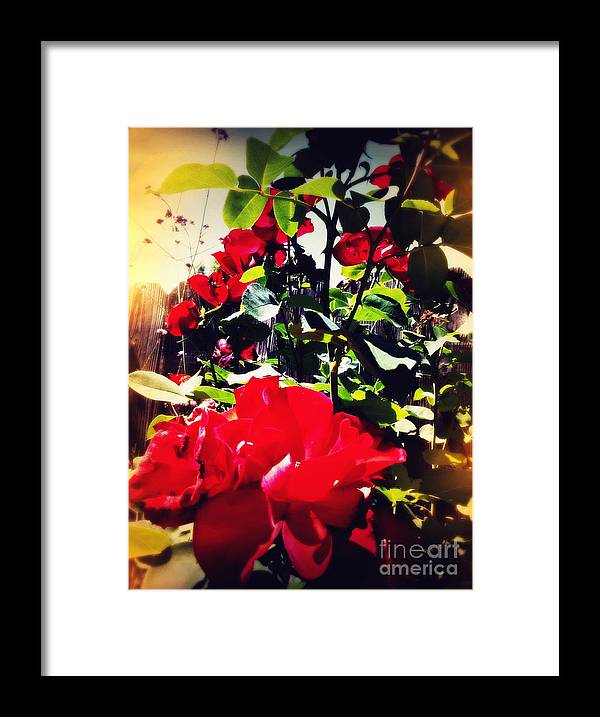 Rose Framed Print featuring the photograph Red Roses by Leslie Hunziker
