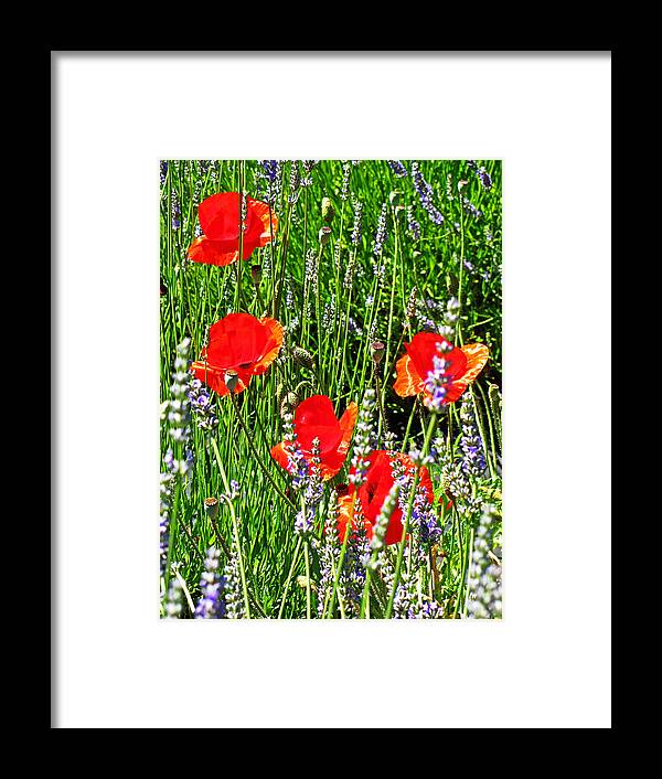 Red Tulips Framed Print featuring the photograph Red Tulips by Kimberley Bennett