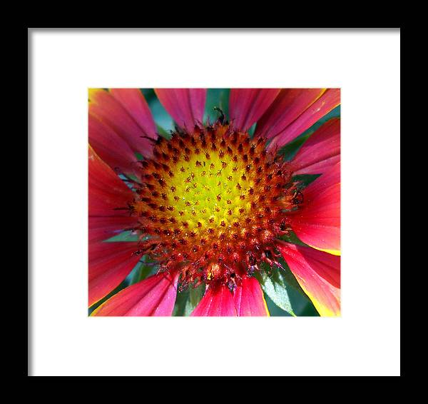 Nature Framed Print featuring the photograph Red Yellow Flower by Duwayne Washington