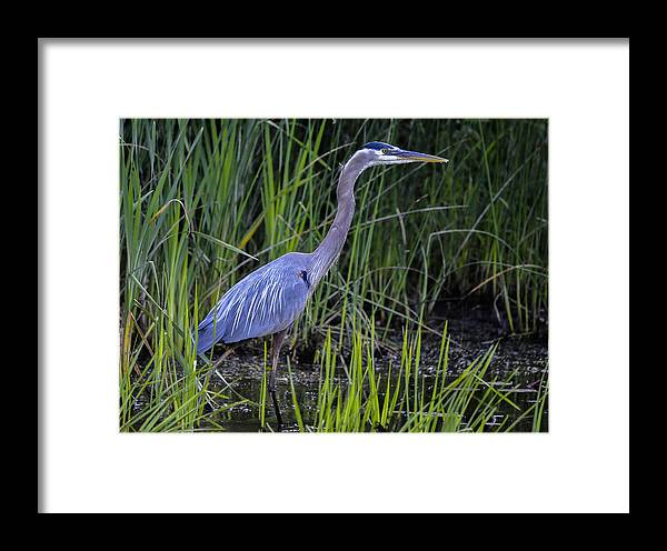 Framed Print featuring the photograph Reed Walker by Brian Stevens