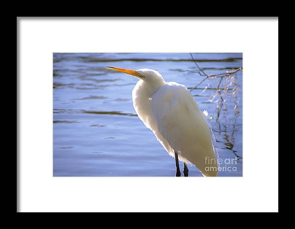 Egret Framed Print featuring the photograph Relaxing by Lynda Dawson-Youngclaus
