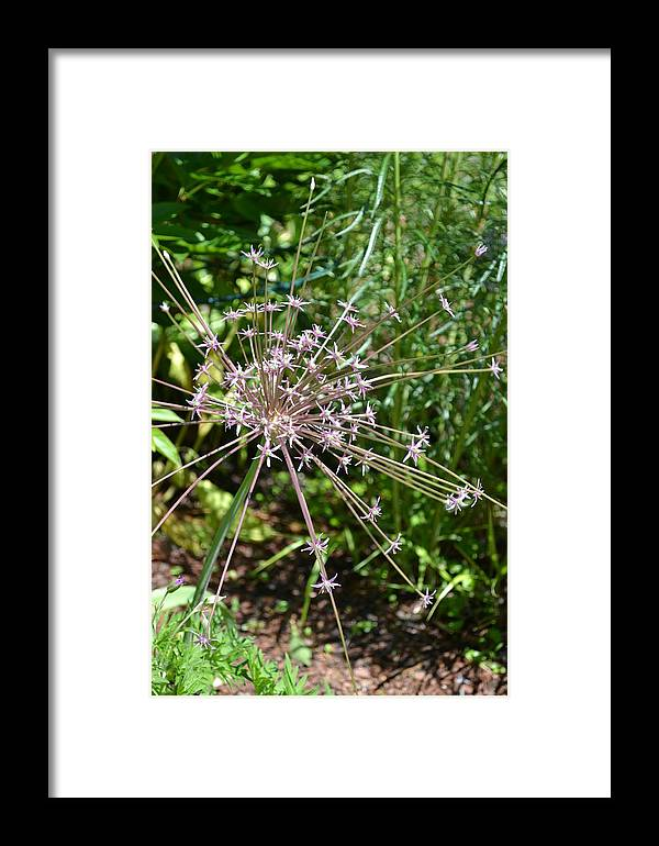 Nature Framed Print featuring the photograph Remaining Fireworks by Tiffany Ball-Zerges