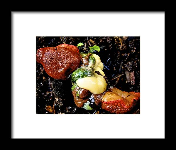 Macro Framed Print featuring the photograph Remains Of The Day by Lisa Kelsey