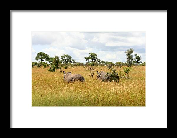 Rhino Framed Print featuring the photograph Rhino Pair by Deborah Hall Barry
