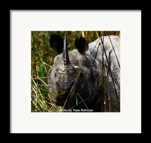 A Black One Horned Rhino At Kaziranga National Park Framed Print featuring the photograph Rhino by Tues Rahman