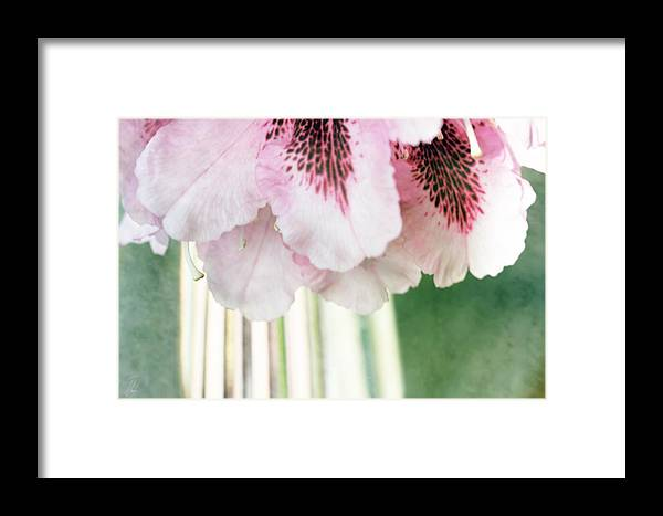 Rhododendron Framed Print featuring the digital art Rhododendron Refraction by Margaret Hormann Bfa