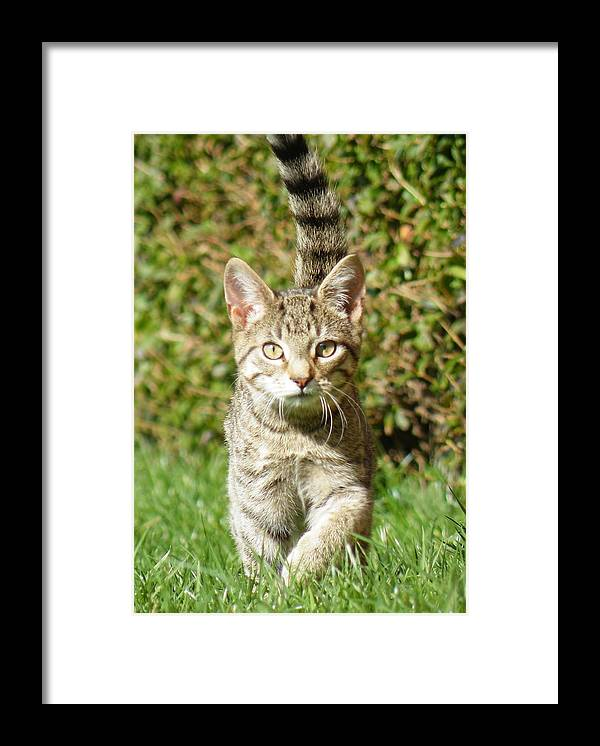 Tom Cat Tabby Riley Cats Eyes Green Grass Framed Print featuring the photograph Riley2 by Ian King