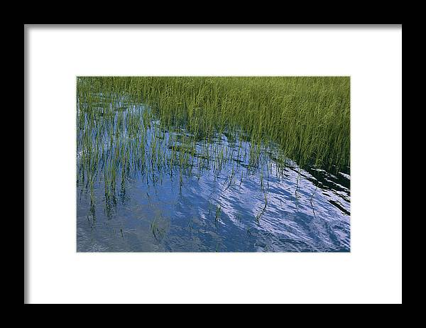 United States Of America Framed Print featuring the photograph Rippling Water Among Aquatic Grasses by Heather Perry