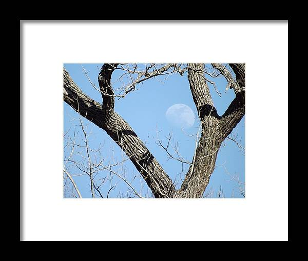Trees Framed Print featuring the photograph Rising Moon by Shannon Bever