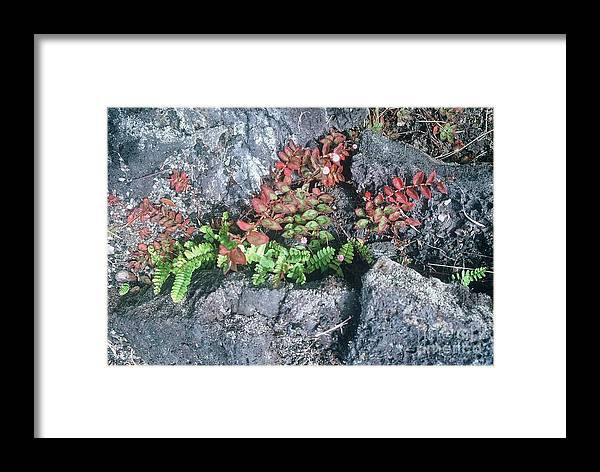 Photo Framed Print featuring the photograph River by Alcina Morello