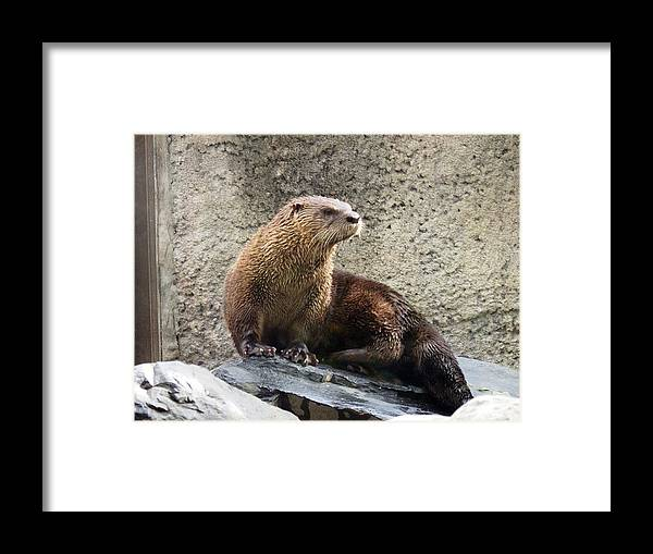 Animal Framed Print featuring the photograph River Otter by Travis Abe-Thomas