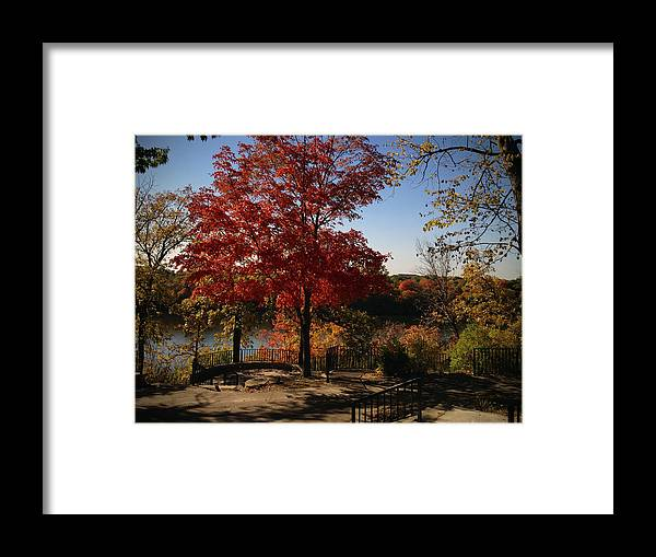 Fall Framed Print featuring the photograph River Tree by Tim Nyberg