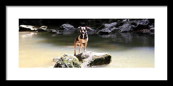River Framed Print featuring the photograph Riverdog by Carlos Felix Porrata