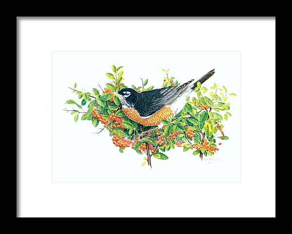 Robin Framed Print featuring the painting Robin on Pyracantha by Bill Gehring