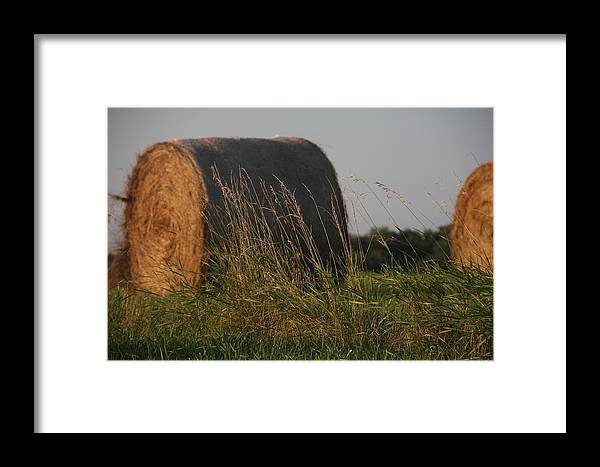 Rolled Bales Framed Print featuring the photograph Rolled Bales Of Hay by Marta Alfred