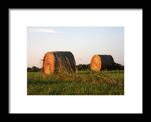 Rolled Bales Of Hay Framed Print featuring the photograph Rolls Of Hay by Marta Alfred