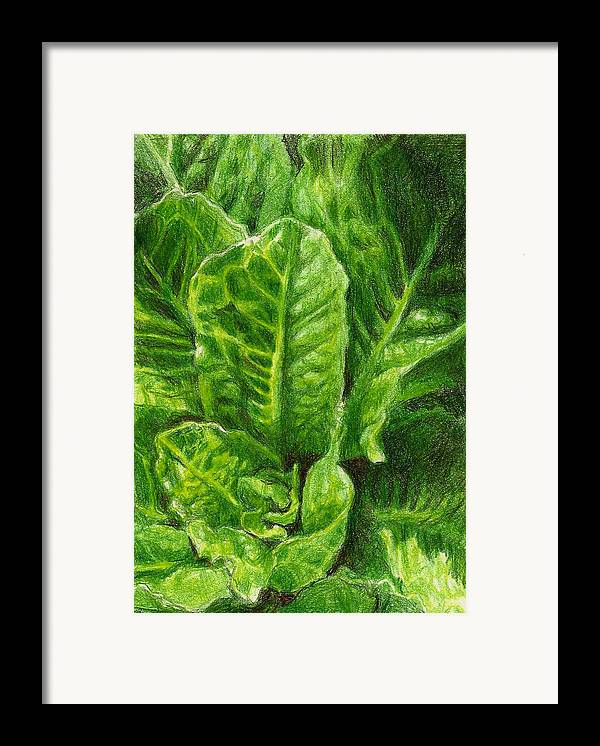 Lettuce Framed Print featuring the photograph Romaine Unfurling by Steve Asbell