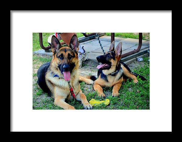 Puppies Framed Print featuring the photograph Rommel And Son Patton by Antonia Citrino