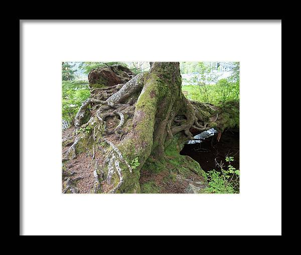 Root Framed Print featuring the photograph Rooting Out Evil by Randall Weidner