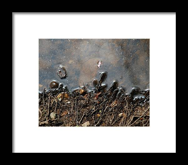 Roots Framed Print featuring the photograph Roots In Water by Kay Lovingood