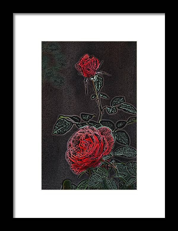 Flower Framed Print featuring the photograph Rose 85 by Pamela Cooper