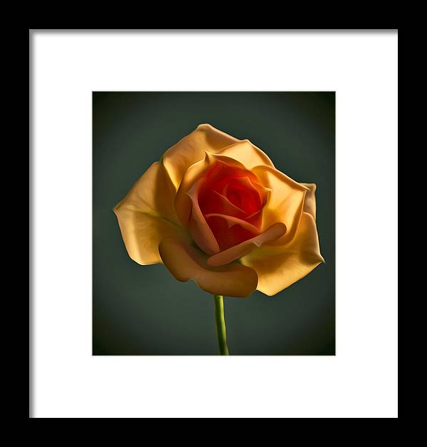 Flower Framed Print featuring the photograph Rose-9 by Vladimir Kholostykh