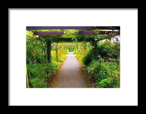 Rose Garden Framed Print featuring the photograph Rose Garden by Sandor Petroman
