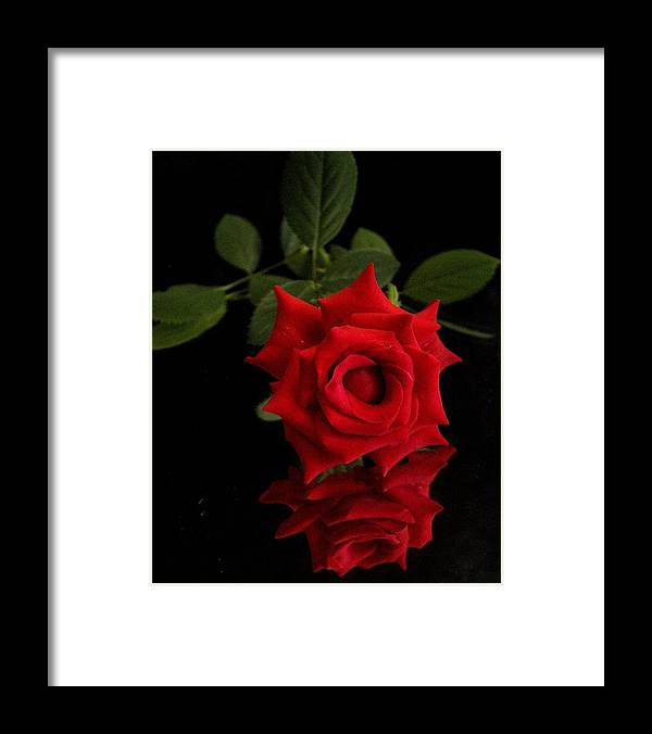 Framed Print featuring the photograph Rose2 by Harrellfz Works