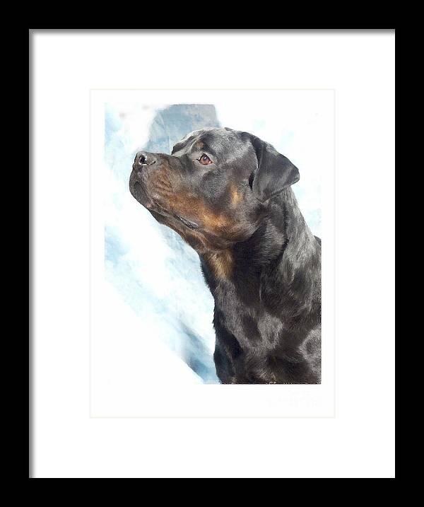 Rottweiler Digital Art Framed Print featuring the digital art Rottweiler 923 by Larry Matthews