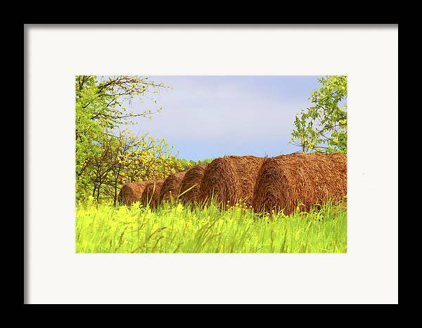 Agriculture Framed Print featuring the photograph Round Bales by Tom Mc Nemar