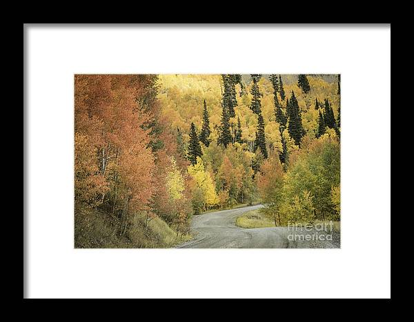 Aspen Fall Color Framed Print featuring the photograph Routt National Forest by David Waldrop