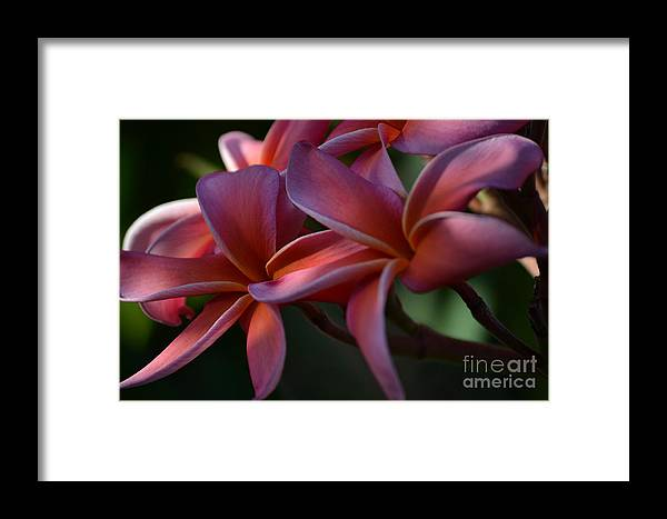 Purple Framed Print featuring the photograph Rubra by Art Kleisen