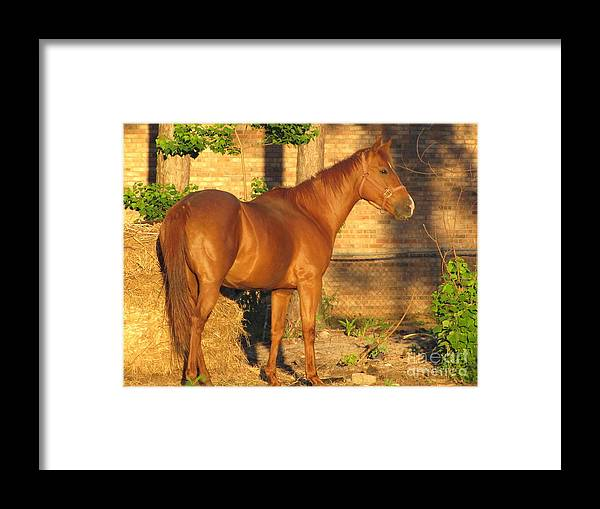 Horse Framed Print featuring the photograph Rusty Standing Proud by Michelle Powell